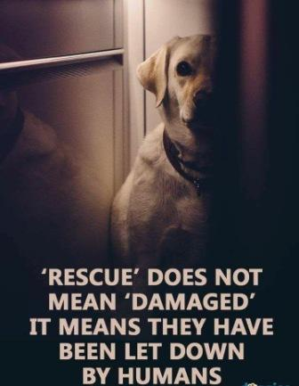 Salisbury Animal Rescue